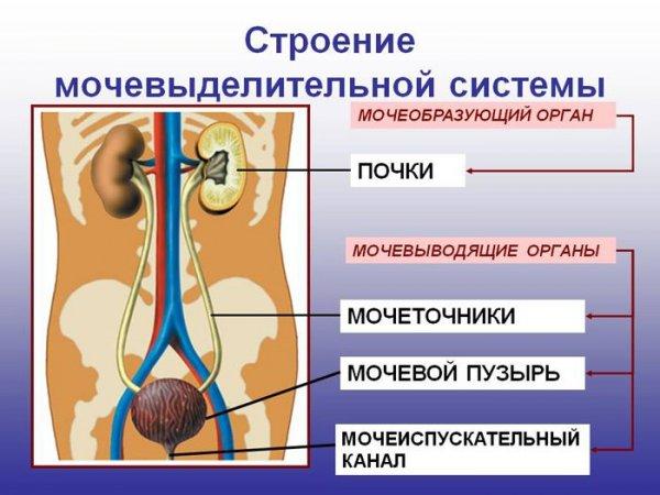 Колет внизу живота справа - причины и лечение